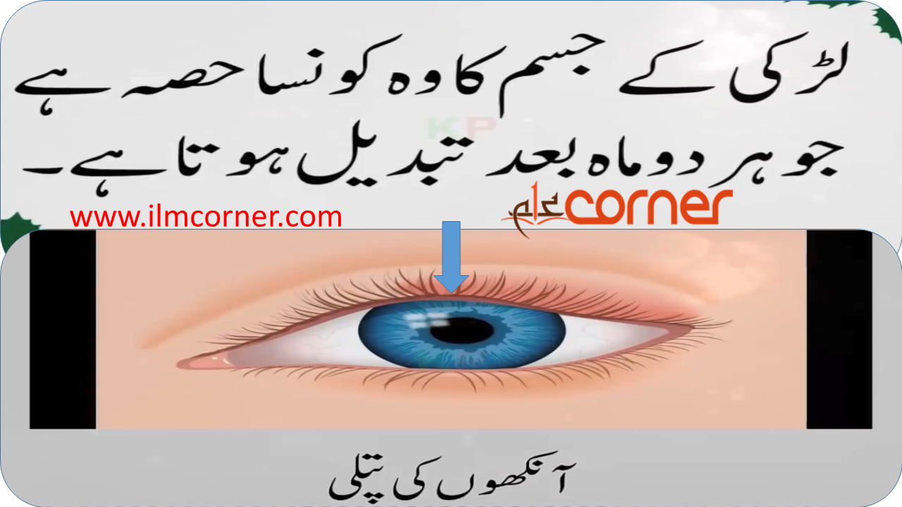 Long Riddles in Urdu with Answers